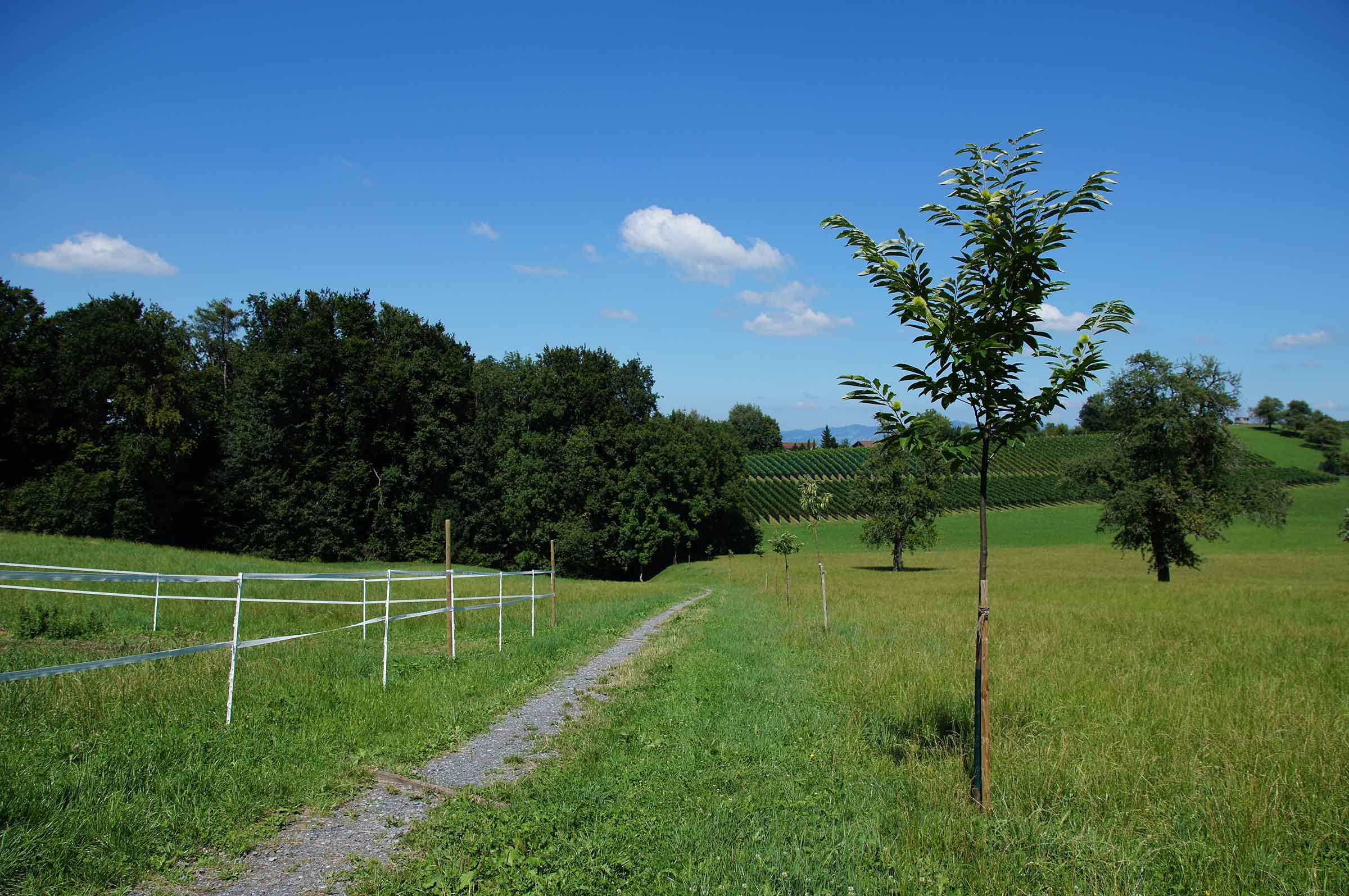 Rundweg Wollerau-Altenbach-Becki_1