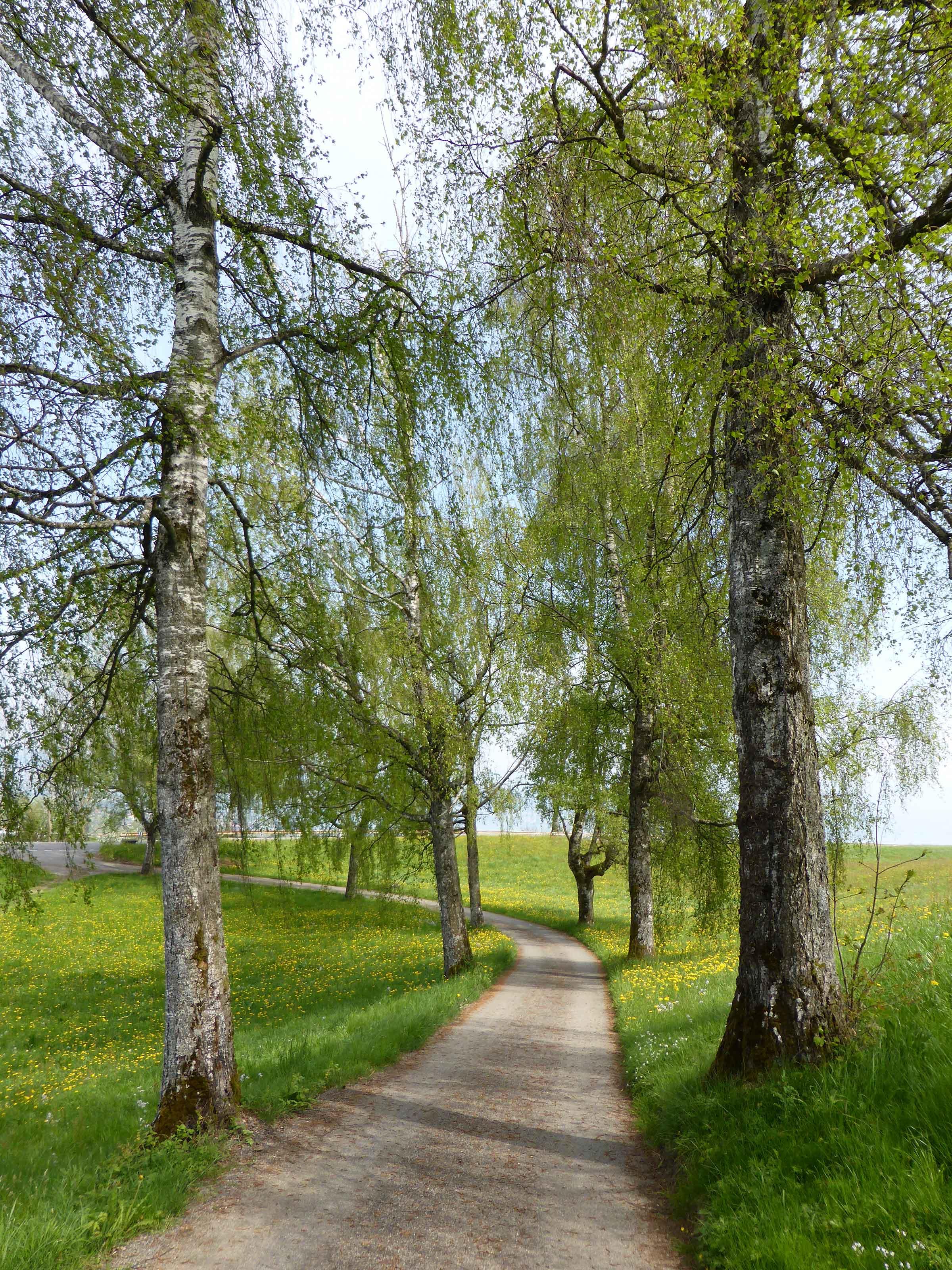 Rundweg Wollerau-Altenbach-Becki_3
