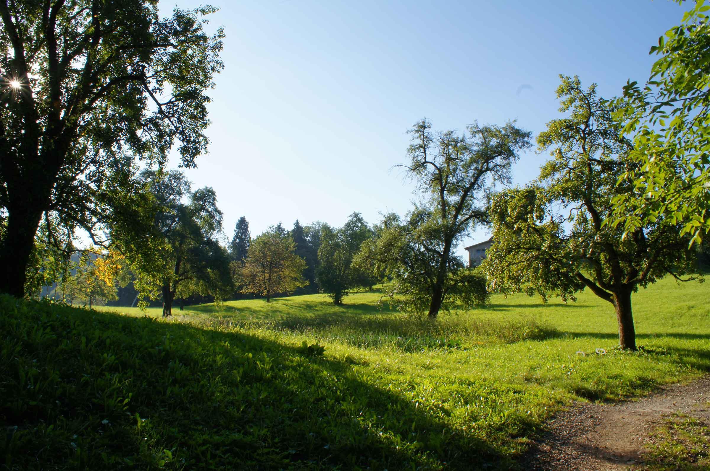 Rundweg Feusisberg Dorf_2