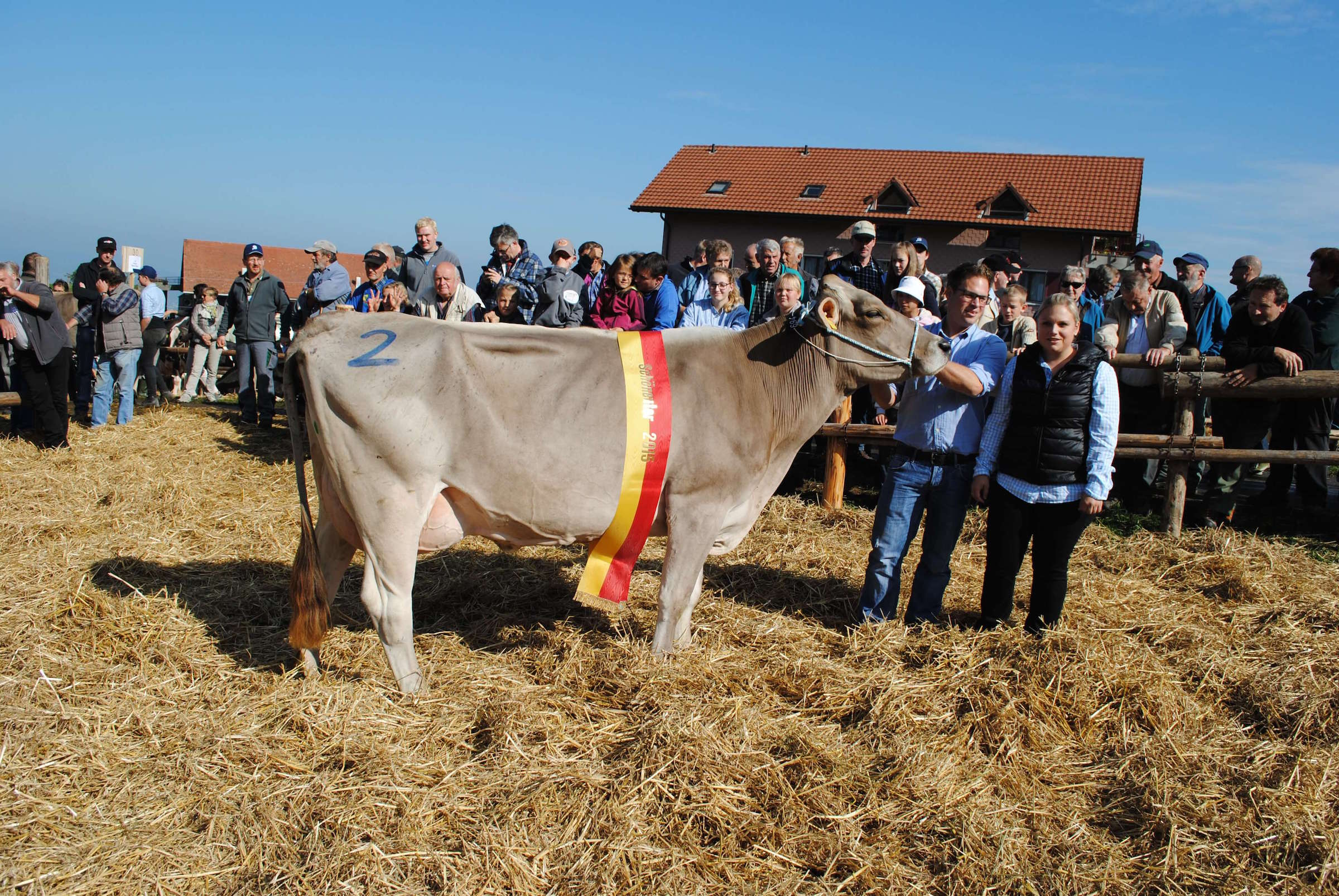 Schoeneuter mittlere Kuehe, Solana, Schatt Armin, Feusisberg (gross)